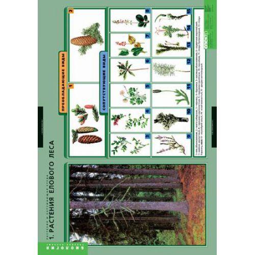 Комплект таблиц. Биология. Растения и окружающая среда (7 таблиц)