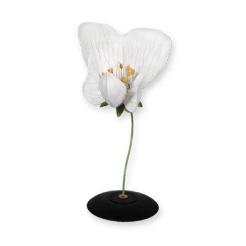 Модель цветка гороха