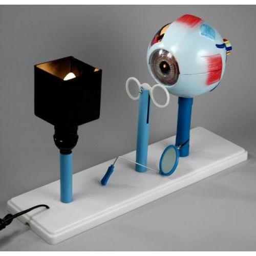 Модель Зрение (на батарейках)