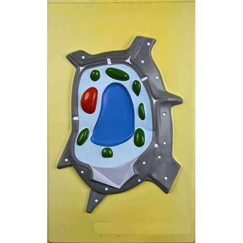 Барельефная модель Клетка