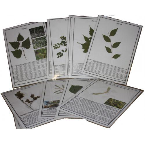 """Гербарий """"Жизненные формы растений """" ламинированный"""