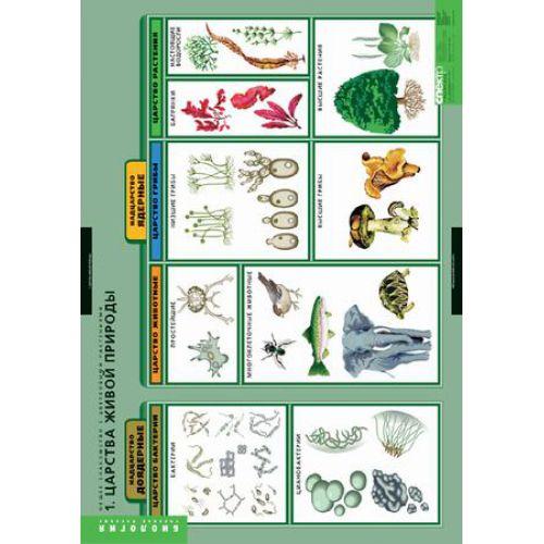 Комплект таблиц. Биология. Общее знакомство с цветковыми растениями (6 таблиц)