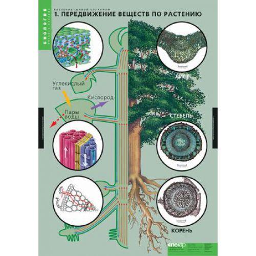Комплект таблиц. Биология. Растение - живой организм (4 таблицы)