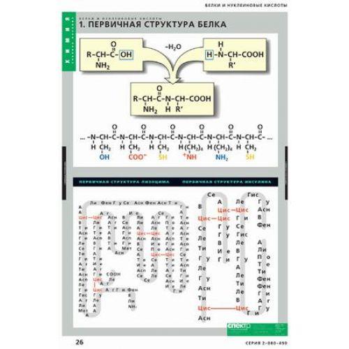 Комплект таблиц. Химия. Белки и нуклеиновые кислоты (8 таблиц)