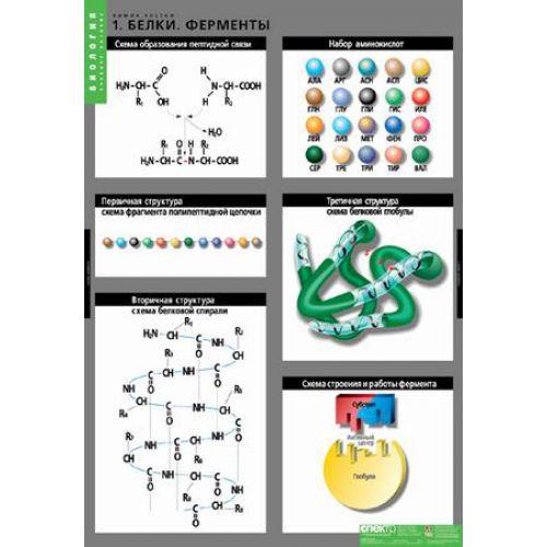 Комплект таблиц. Биология. Химия клетки (3 таблицы)
