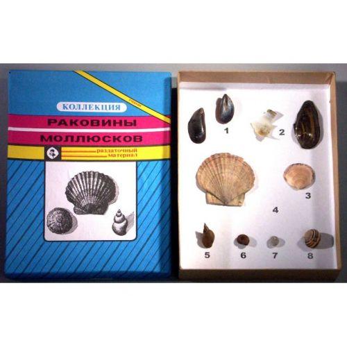 """Коллекция """"Многообразие раковин моллюсков"""""""
