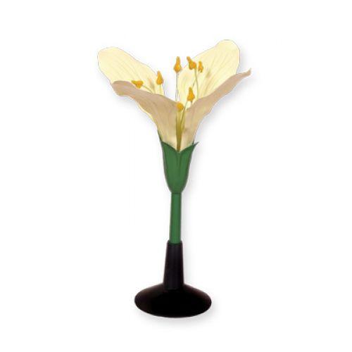 Модель цветка капусты