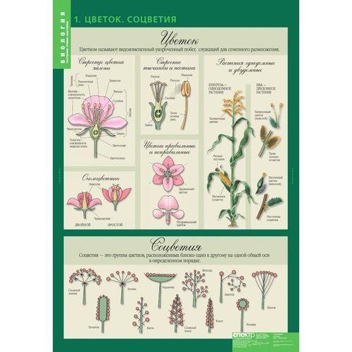 Комплект таблиц. Биология. 6 класс. Растения, грибы, лишайники. 14 таблиц + методика